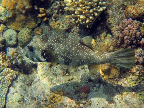 Ein Fisch aus der Unterwasseraufnahme