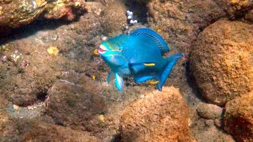 Dieser Fisch wurde mit der Kodak EasyShare Sport Kamera aufgenommen