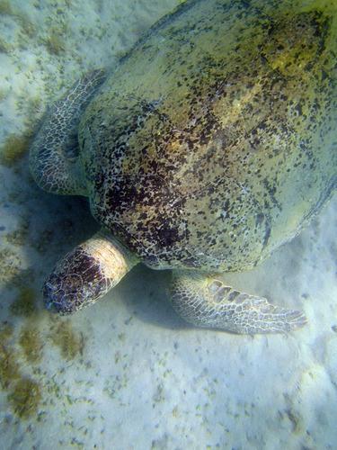 Die Unterwasserschildkröte mit der Canon PowerShot festgehalten