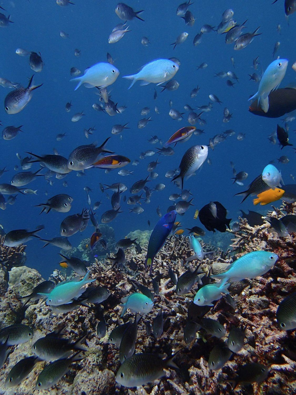 Ein brillantes Bild eines Fischschwarms