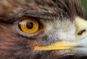 beamer-eagle