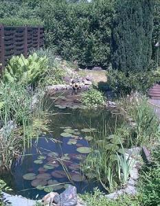 Es gibt wenige Alternativen zum Teichfilter für den Gartenteichbesitzer