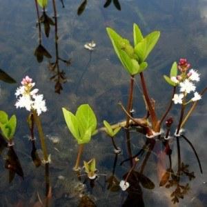 Wasserpflanzen brauchen Zeit bis sie richtig wachsen