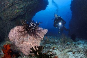 Canon PowerShot D30 Digitalkamera Unterwasserbild