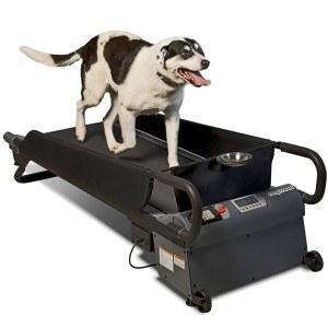 Ein Hund läuft auf einem Laufband