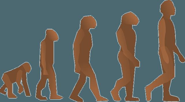 Bart-Evolution