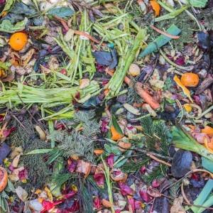 Internet vs. Fachhandel: wo kaufe ich meinen Komposter am besten?