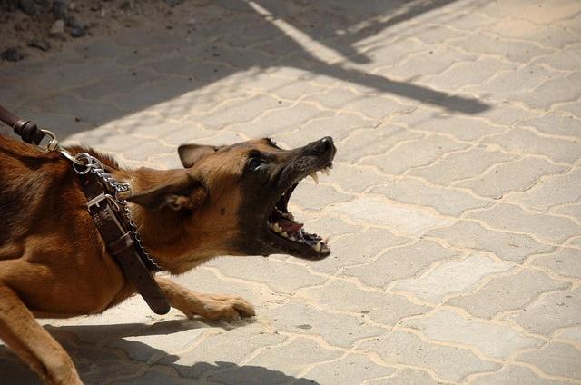 dog-900215_640