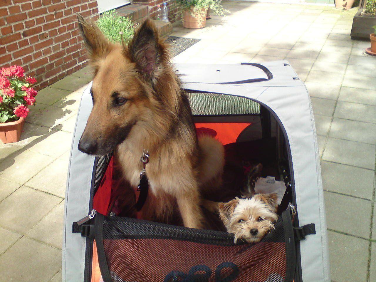 Welche Arten von Hundeanhängern gibt es?