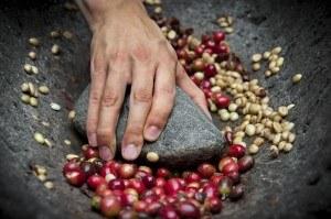Kaffeebohnen Bearbeitung