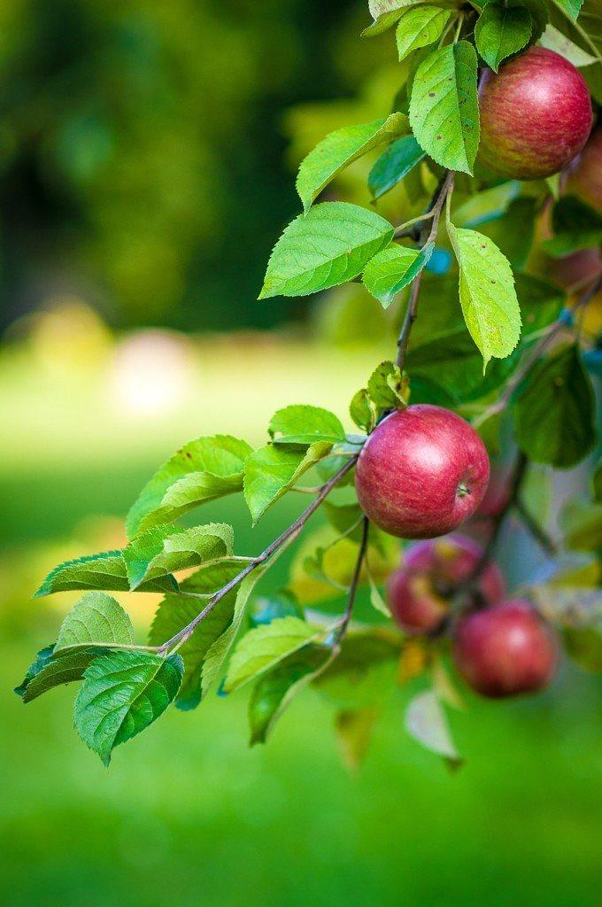Die Geschichte der Saftgewinnung aus Früchten