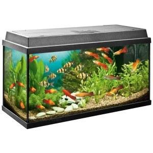 Nützliche Tipps, wie Sie ihr Aquarium richtig bepflanzen.