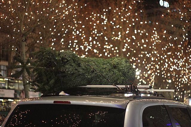 Baum auf Dach