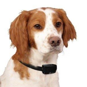 Das Tierschutzgesetzt regelt ganz klar die Anwendung eines Erziehungshalsbandes.
