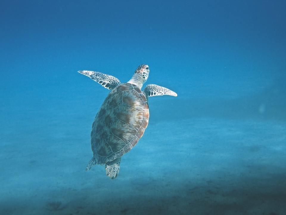 Turtle 601286