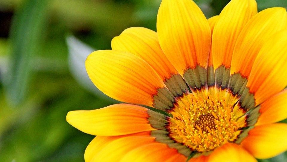 yellow-715540_960_720