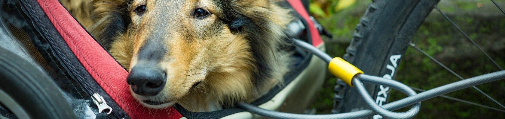 Hundeanhänger im Test auf ExpertenTesten.de