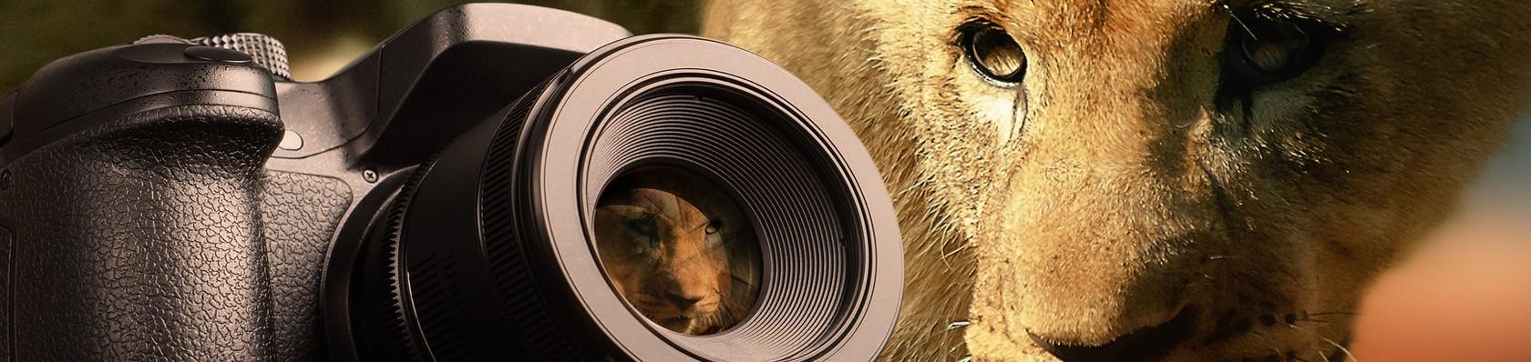 Spiegelreflexkameras im Test auf ExpertenTesten.de