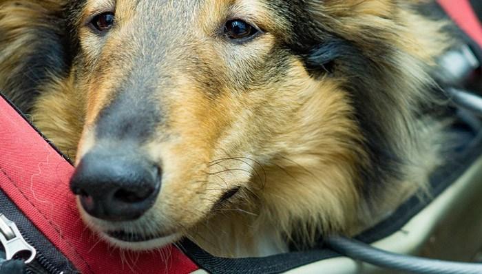 Hundeanhänger im Test auf ExpertenTesten