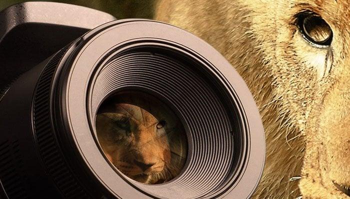 spiegelreflexkamera test 2018 die 20 besten spiegelreflexkameras im vergleich. Black Bedroom Furniture Sets. Home Design Ideas