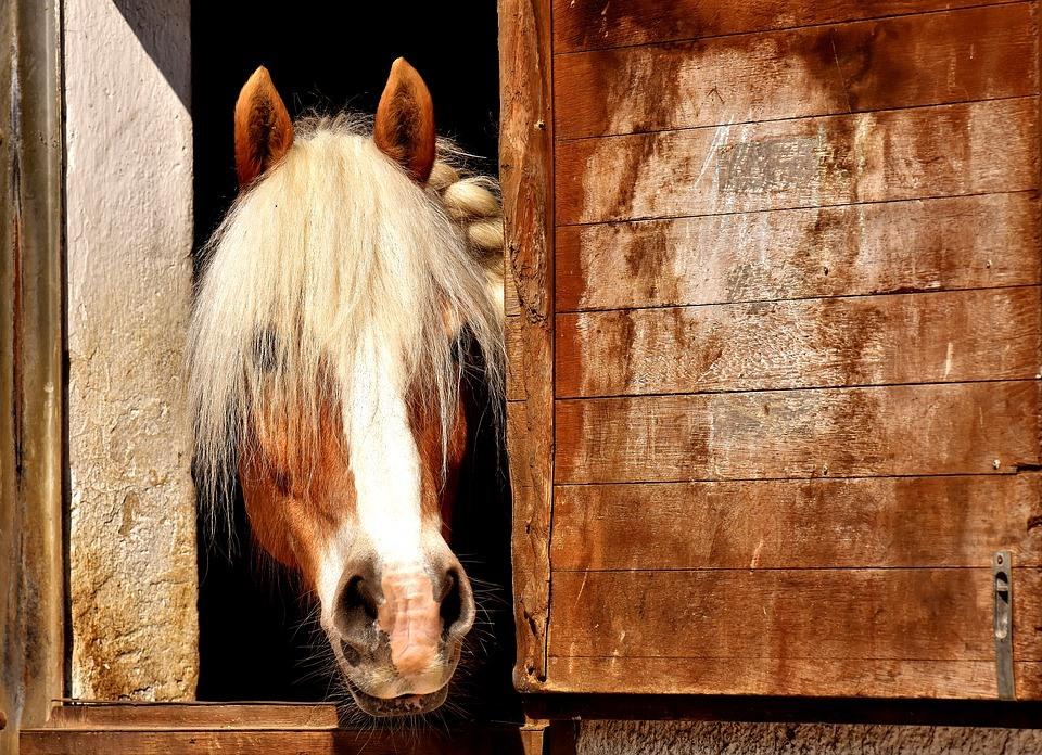 Horse 2196654