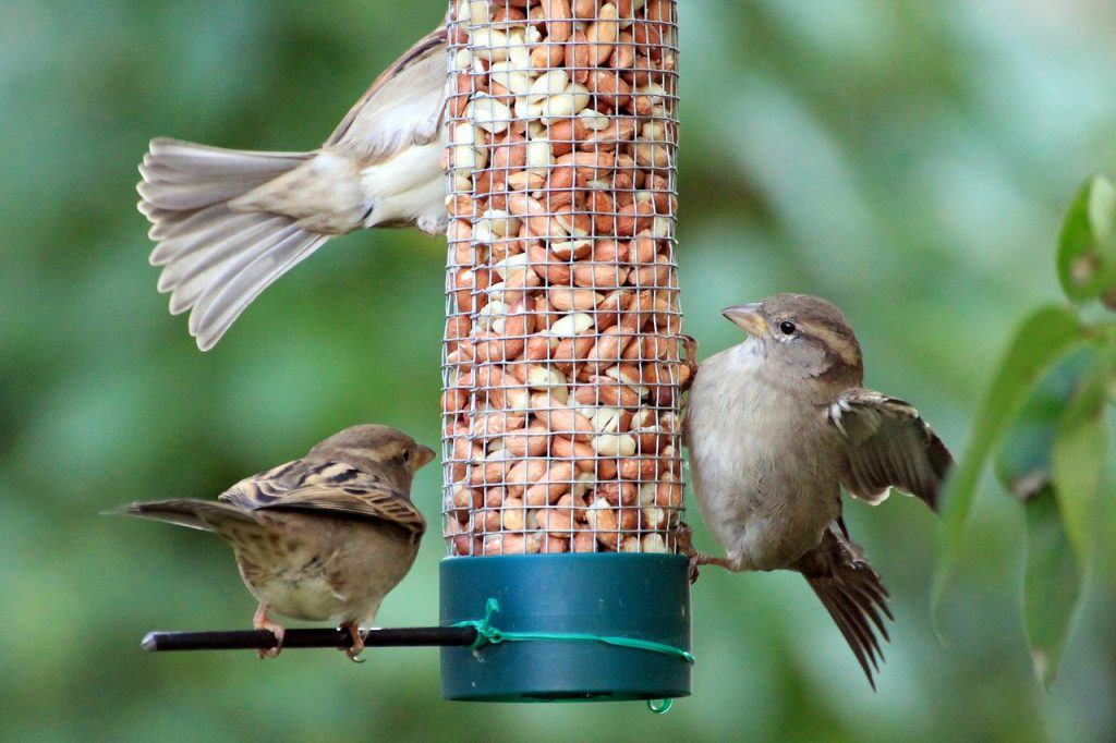 Sparrows 1650728 1280