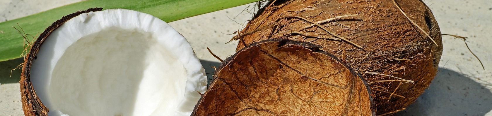 Kokosöle im Test auf ExpertenTesten.de