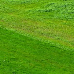 Rasenduenger Eisen Ratgeber 05 1