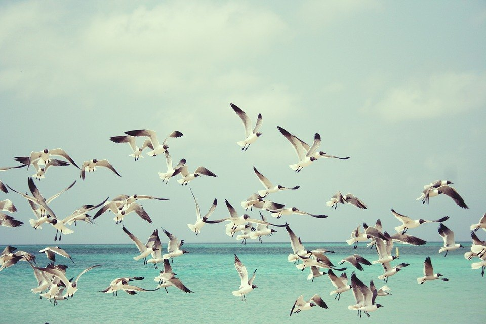 Seagulls 815304