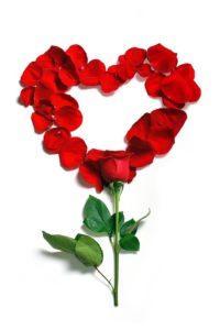 Rose 1215314