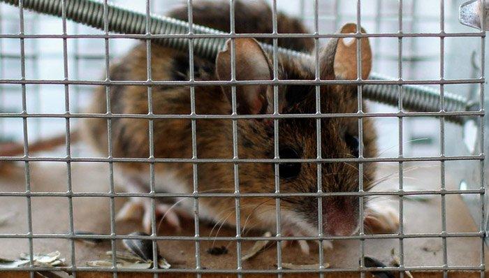 Mausefallen im Test auf ExpertenTesten