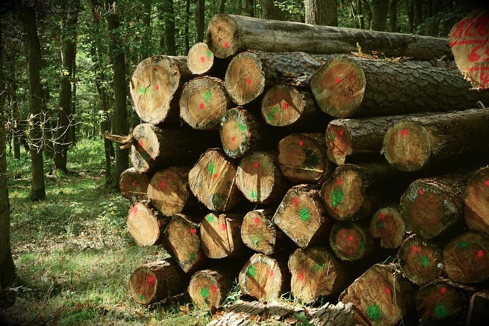 Holzstapel 2792683