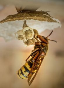 Bridgekamera für die Makrofotografie Biene