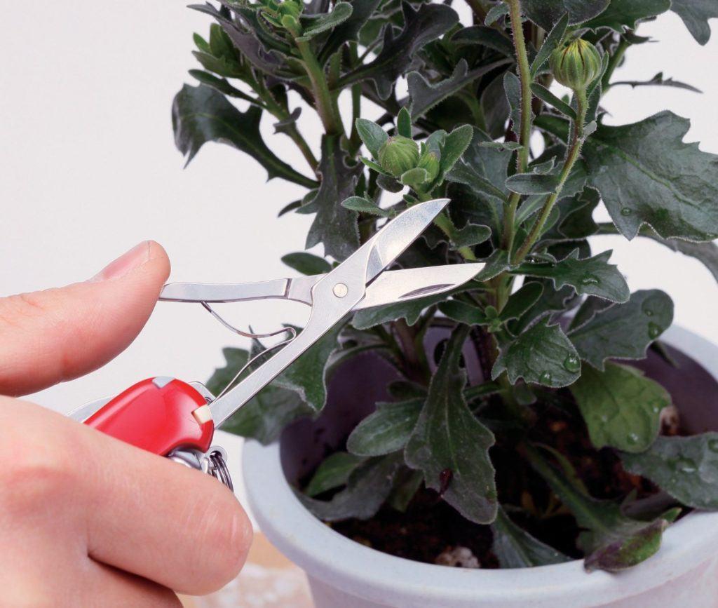 Schnitt an einer Pflanze im Schweizer Taschenmesser Test