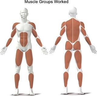 Das sind die Muskeln, die trainiert werden Test