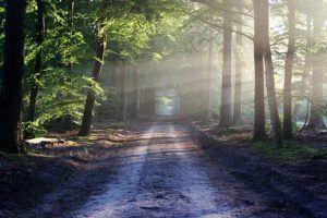 Gps Geraet Wald