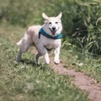 Laufband für Hunde - ist das sinnvoll?