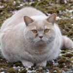 Katze dicke Katze