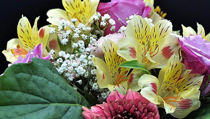 Blumenversände im Test auf ExpertenTesten