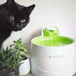 Geschichte des Katzenbrunnens im aktuellen Test