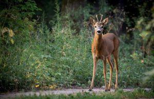 Laserentfernungsmesser für die jagd einsetzbar? expertentesten