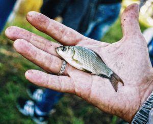 Fisch Hand