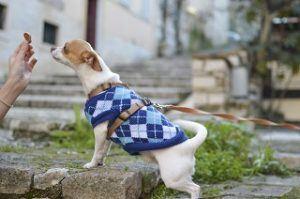 Hund frisst Wildkind Hundefutter aus Hand im Test