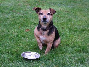 Im Freien Hund mit Wildkind Hundefutter im Test