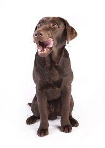 Schmackhaftes und sättigendes Wildkind Hundefutter im Test