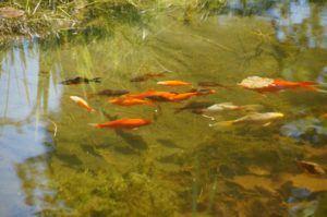 Vorteile aus einem Teichfilter Test bei ExpertenTesten