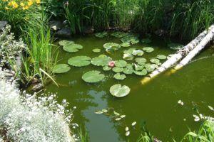 Alles wissenswerte aus einem Teichfilter Test