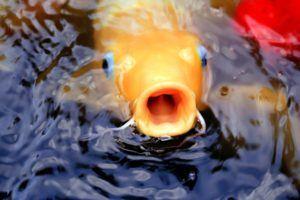 Worauf muss ich beim Kauf eines Teichfilter Testsiegers achten?