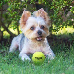 Folgende wichtige Hinweise müssen bei einem Tennisbälle Testsiegers Kauf beachtet werden?