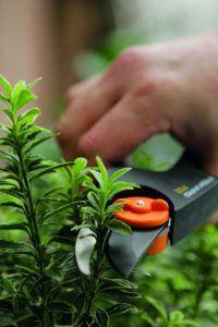 Wichtige Tipps zum Gartenscheren Testsieger Kauf